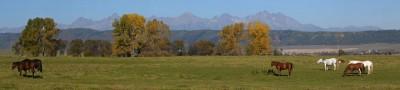 DSC_0047_panorama